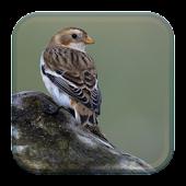 Guia de Observação Aves Norte