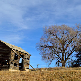 Weathered by Derrick Leiting - Buildings & Architecture Decaying & Abandoned ( warm, winter, sky, tree, blue, shack, colorado, decrepit, reflective, weathered, abandoned, building )