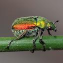 Green scarab beetle