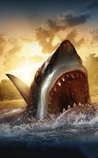 鯊魚高清 動態壁紙