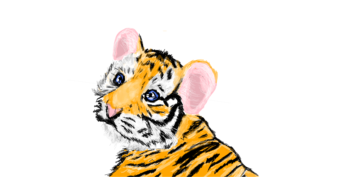 Baby Tiger 187 Drawings 187 Sketchport