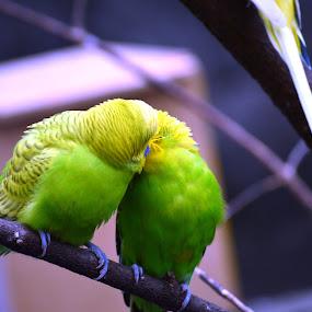 by Shantanu Deshpande - Animals Birds