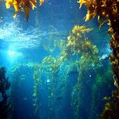 Under Water Scene HD