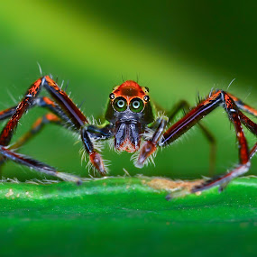 ZOMBIE... by Ahmad Zaini - Animals Insects & Spiders