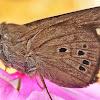 Skipper (butterfly)