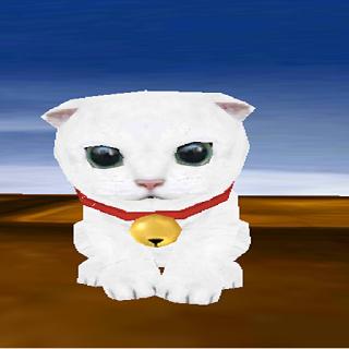 Cat Wallpaper White