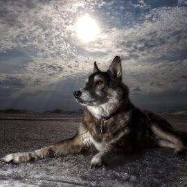 Jasper by Scott Ferrede - Animals - Dogs Portraits ( #GARYFONGPETS, #SHOWUSYOURPETS )