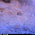Crystal Cove Berns ESL Animal Tracking
