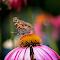 ButterflyHeaven.jpg