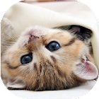 Kittens live wallpaper icon