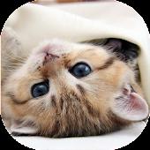 Kittens live wallpaper
