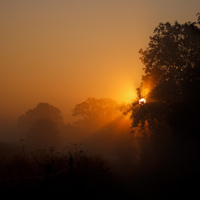 Misty sunrise through the trees by Keren Woodgyer - Landscapes Sunsets & Sunrises ( countryside, nobody, silhouette, beauty, landscape, glow, photography, cotswold, tranquil, england, nature, autumn, sunshine, light, orange, sunbeams, forest, morning, sunlight, rural, dawn, fog, serene, trees, sunrise, early, mist )