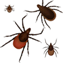 Lyme Disease Safety Lite icon