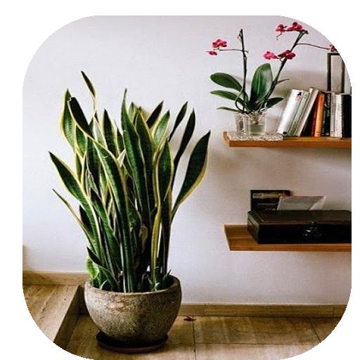 Purificar Ambiente-Plantas 生活 LOGO-阿達玩APP