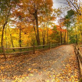 Milkman's Lane by Al Duke - Landscapes Forests ( nature, colorful, color, toronto, fall, milkman, lane,  )