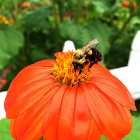 Bee at work by Mike Tapley - Flowers Flower Gardens ( flower bee )