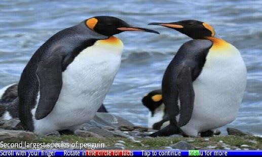 Penguins of Antarctica FREE- screenshot thumbnail