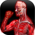 Anatomy Muscles icon