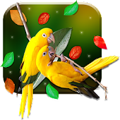 Birds 3D Live Wallpaper