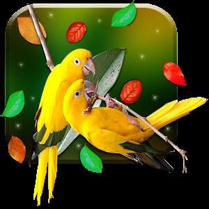 Birds Live Wallpaper I5WY6Fwepp5dW8MdDlSk