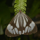 Marble White Moth