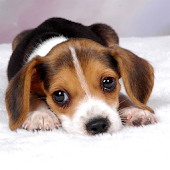 Free Puppy Dog Wallpaper
