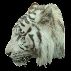 White Tiger Profile Sticker