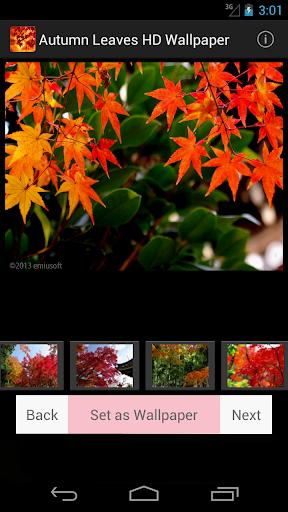 Autumn Leaves HD Wallpaper 1.2 Windows u7528 1