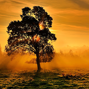 Autumn Morning by Leslie Hanthorne - Landscapes Sunsets & Sunrises