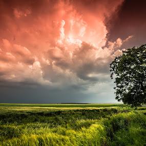 Sunset storm by Lupu Radu - Landscapes Prairies, Meadows & Fields ( field, tree, sunset, storm,  )