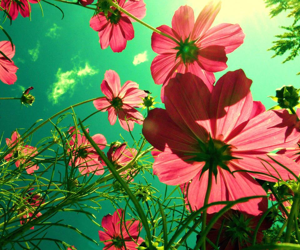 3D Flower- screenshot