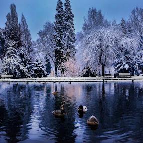WINTER FAIRYTALE by Nataša Kos - City,  Street & Park  City Parks
