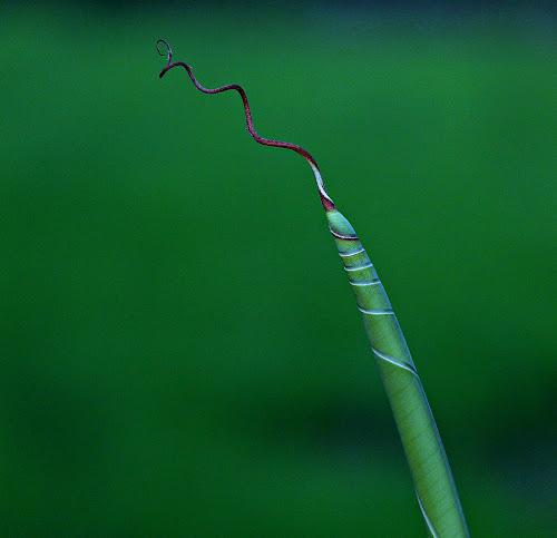 leaf by Anup Kumar Adhikari - Nature Up Close Leaves & Grasses