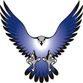 Arnhem Falcons Football
