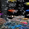 Live Wallpaper Fishbowl