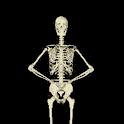 Funny Skeleton Dancing LWP logo