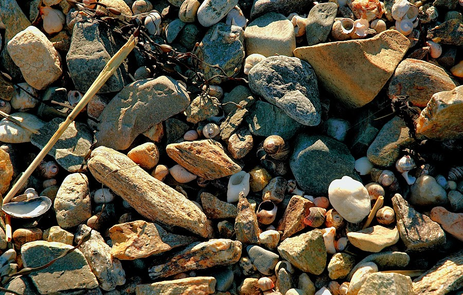 NH Sea Coast by Jack Sciacca - Nature Up Close Rock & Stone (  )