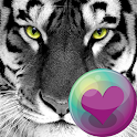Big Cats HD Wallpapers icon