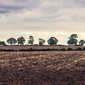 The Back Way. by Steve Hird - Landscapes Prairies, Meadows & Fields ( plowed, field, hill, england, tree, british, summer, loan )