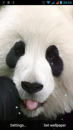 熊貓動態壁紙