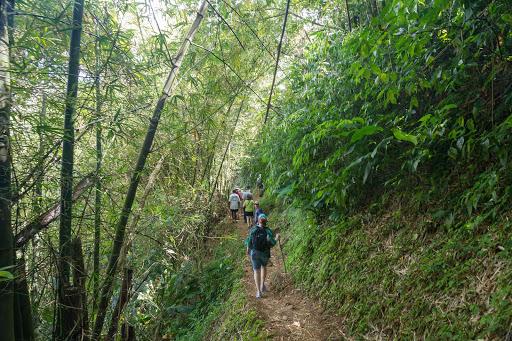 trek-waterfall-grenada - Trek along a hiking path to a waterfall in Grenada.