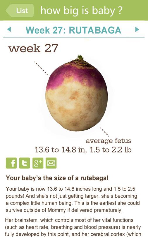 My Pregnancy Calendar - screenshot
