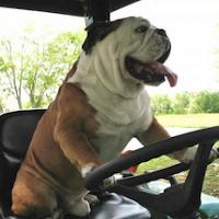 Driver Bulldog