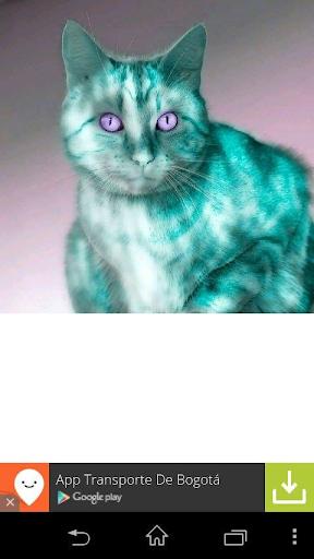 Maulla El gato