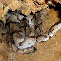 Dangerous Wildlife of Southeastern USA