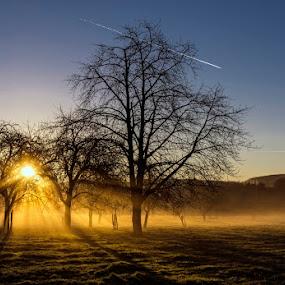 Sunrise on the mist by Romain Bruot - Nature Up Close Trees & Bushes ( soleil, matin, brume, sunrise, landscape, morning, lever de soleil, sun )