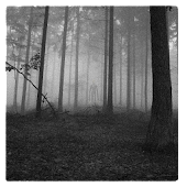 Slenderman's Forest LW