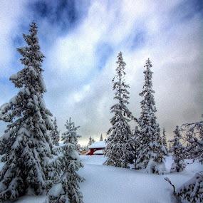Winter story by Stine Engelsrud - Instagram & Mobile Instagram ( ig_europe, royalsnappingartists, landscape_captures, rsa_trees, ic_trees, rsa_ladies, unitedbytrees, ig_exquisite, instanaturefriends, ig_epicshots, world_shots, stunning_shots, wu_norway, pro_ig, _rsa_nature, thewhisperers, igworldclub, ig_shotz, theworld_thru_youreyes, treeshunter )