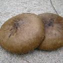 mushrooms in sand!!