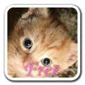KittyWall FREE -LiveWallpaper icon